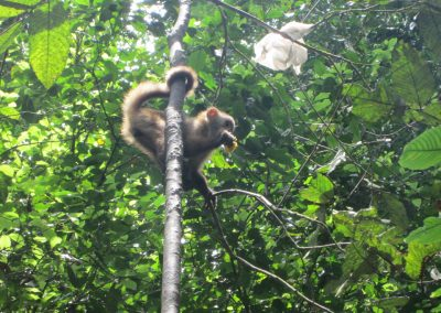 corto-maltes-monkey