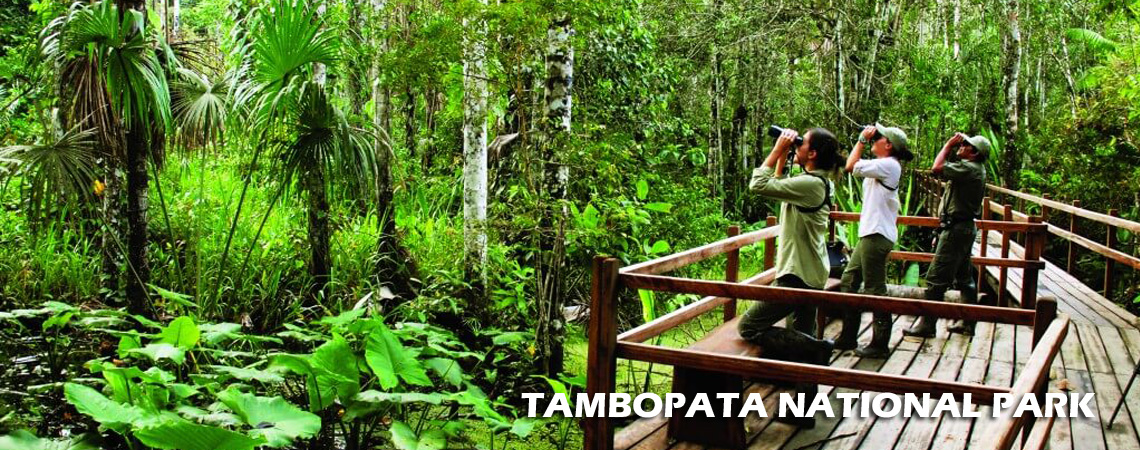 tambopata-national-park